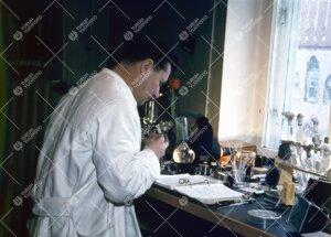 Kasvitieteen apulaisprofessori Paavo Kallio Phoenixissa  1950-luvun loppupuolella.