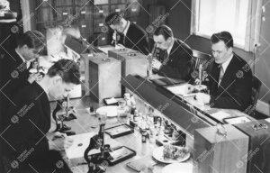 Kasvitieteen opiskelijoita työssään laitoksen tiloissa  1950-luvulla.