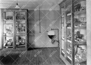 Todennäköisesti eläintieteen kokoelmia Phoenixissa 1920-luvulla.