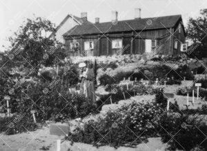 Turun Yliopiston kasvitieteellinen puutarha Iso-Heikkilässä  1920-luvun lopulla.