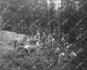 Varusmiehiä Tuorlan töissä syksyllä 1951.