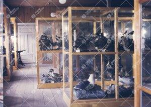 Turun Yliopiston eläintieteellistä kokoelmaa 1950-luvun  jälkipuolella. (Lintumuseo Phoenixin vin