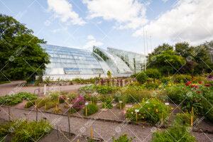 Turun yliopiston kasvitieteellisen puutarhan kasvihuoneet kesällä 2012